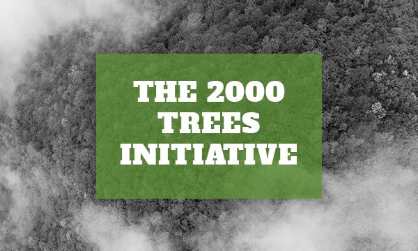 UPDATE: The 2000 Trees Initiative – How we did in 2019