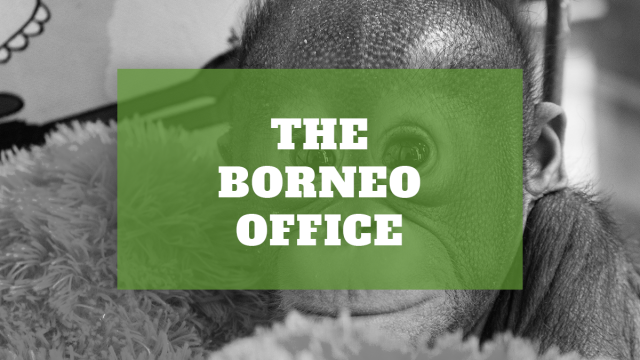 The Borneo Office