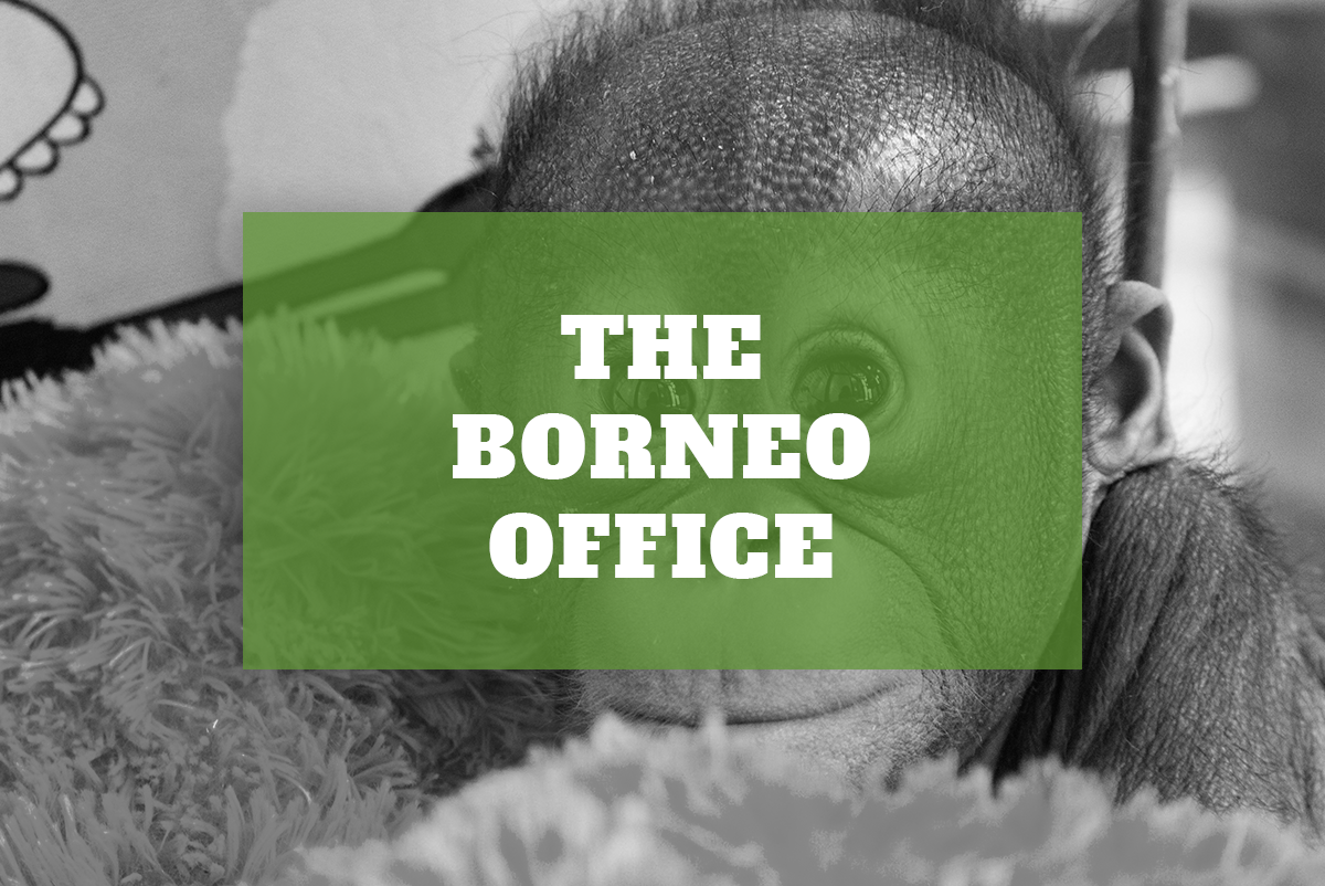 The Borneo Office