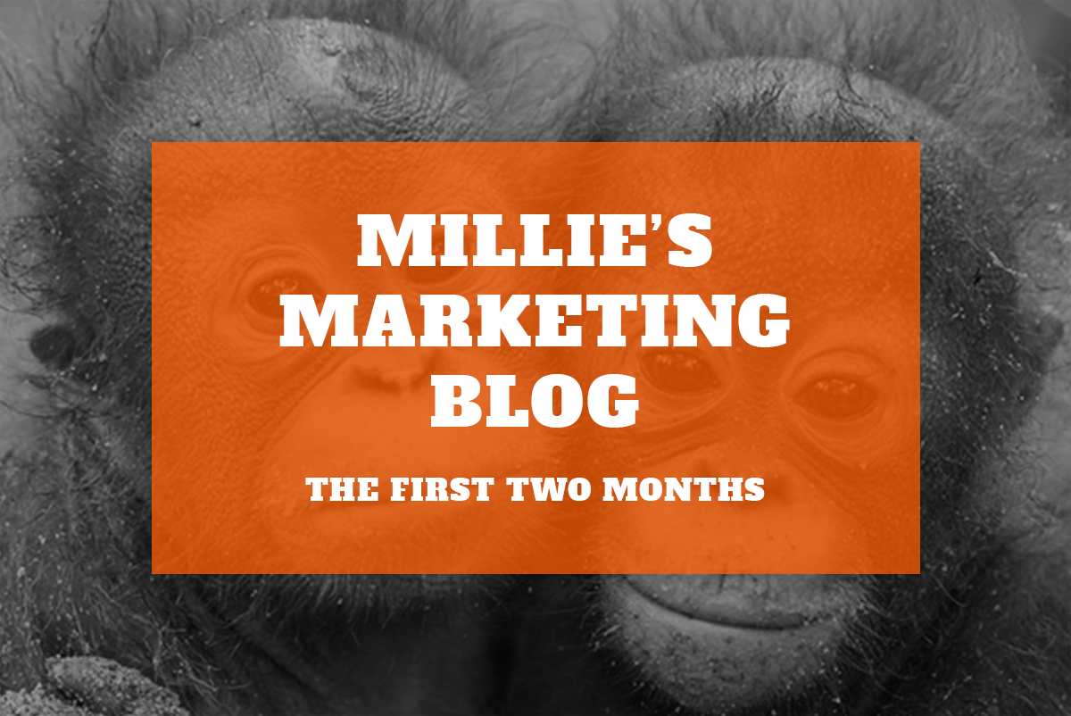 Millie's Marketing Blog – Two Months In